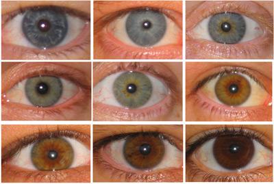 un test adn pour conna tre la couleur des yeux et des cheveux police scientifique. Black Bedroom Furniture Sets. Home Design Ideas