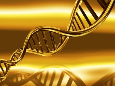 ADN evolutions