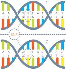 ADN SNP evolution police scientifique