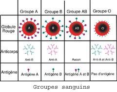 Groupes sanguin - Ted Bundy