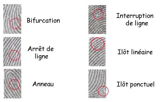 minuties caractéristiques dessins digitaux empreintes