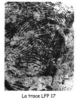 trace LFP17 Brandon Mayfield identification