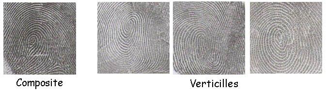 verticille et composite - empreintes digitales