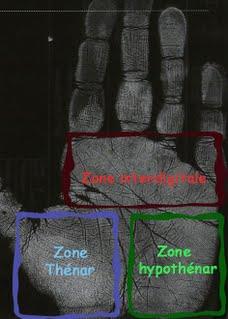 empreinte palmaire dessin digitaux police scientifique