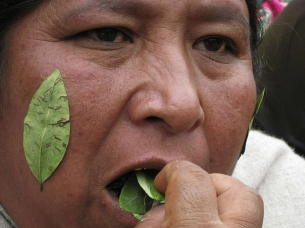 Indien machant feuille de coca cocaine