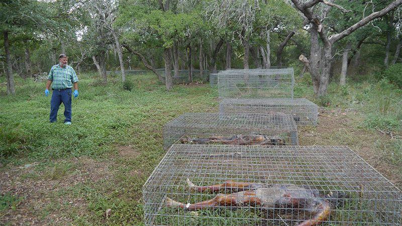 Des corps près d'un bois dans une ferme des corps aux Etats-Unis